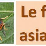 La lutte contre le frelon asiatique