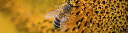 Pensez à déclarer vos ruches !